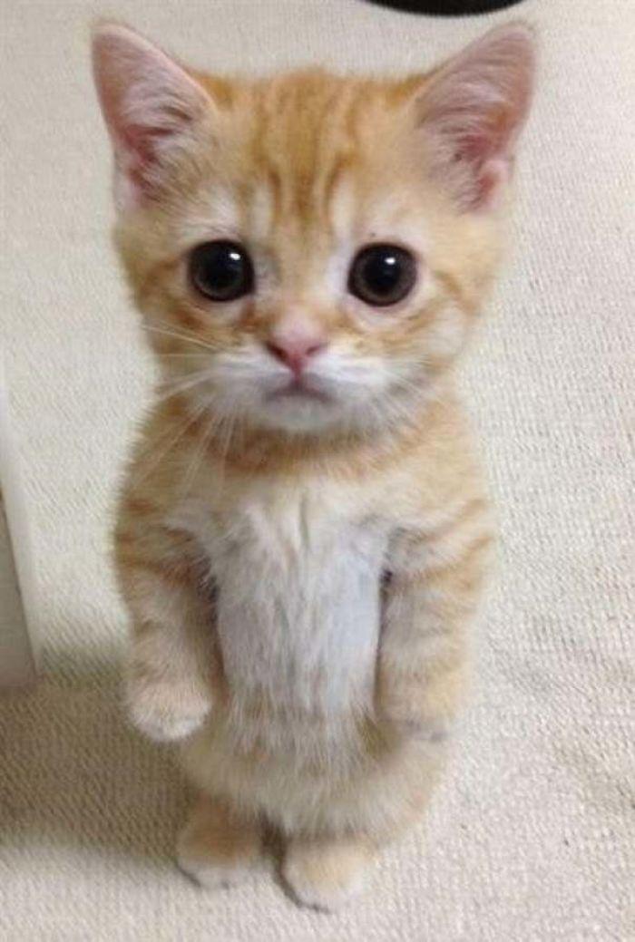 kucing berdiri dua kaki