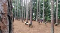 Wana Wisata Pokland adalah kawasan hutan pinus yang berada di Desa Haurwangi, Kecamatan Haurwangi, Cianjur. Destinasi seluas 20 hektar ini diresmikan Bupati Cianjur Irvan Rivano Muchtar 2017 silam. (Ismet Selamet/detikcom)
