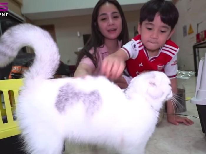kucing nagita slavina dan rafathar