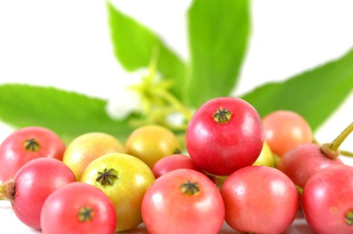 muntingia calabura fruit drop on the ground