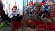 Perdana! Indonesia Ekspor Bawang Putih