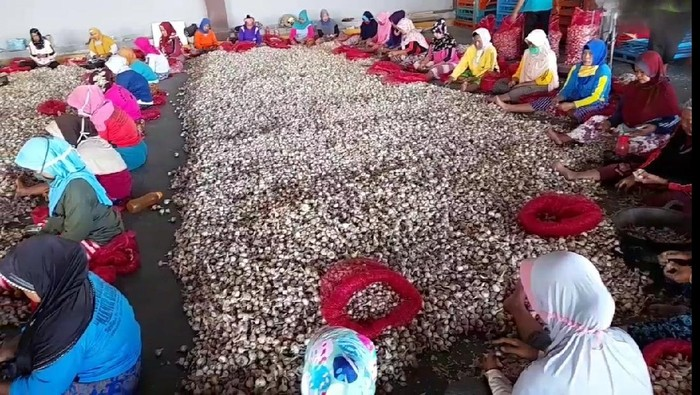 Ekspor perdana bawang putih