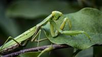 Spesies Baru Ditemukan di Vietnam, Diberi Nama David Attenborough