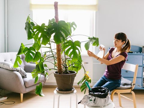 Woman taking care of plants at home