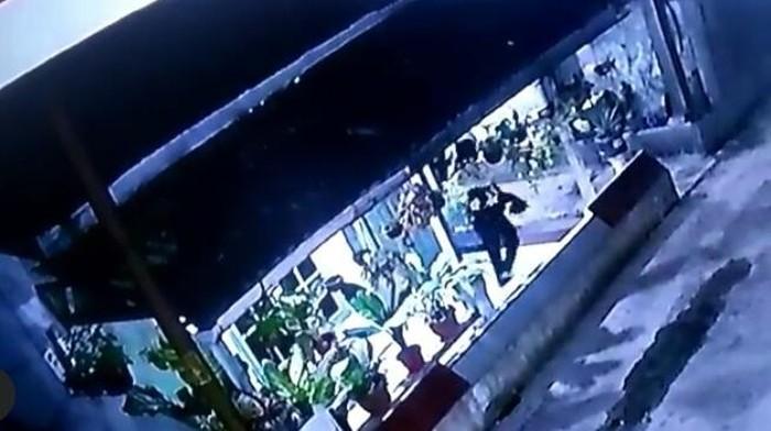 Screenshot CCTV pencurian tanaman hias di Medan (dok. Istimewa)