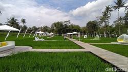 SvargaBumi, Persawahan Keren di Dekat Candi Borobudur