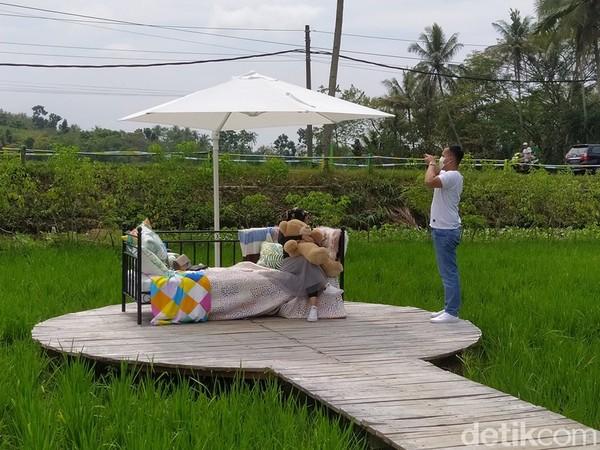 Wisata ini menyediakan spot berfoto dengan latar belakang persawahan.