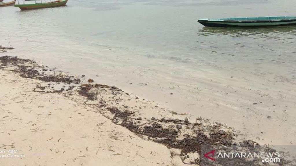 Tumpahan Minyak Mentah Penuhi Pesisir Pulau Pari Kepulauan Seribu