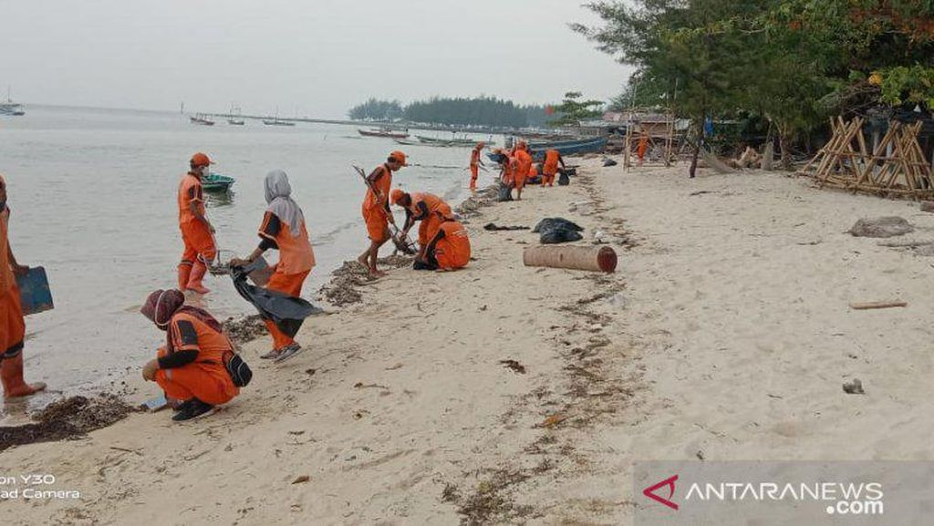 Pesisir Pulau Pari Tercemar, 470 Kantong Limbah Minyak Mentah Dikumpulkan