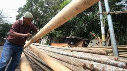 Penjual Pohon Pinang Curhat Omzet Turun di HUT ke-75 RI