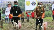Mentan Targetkan Produktivitas Jagung Naik hingga 9 Ton Per Hektare