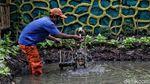 Lahan Pertanian Ini Ada di Jakarta Utara Lho