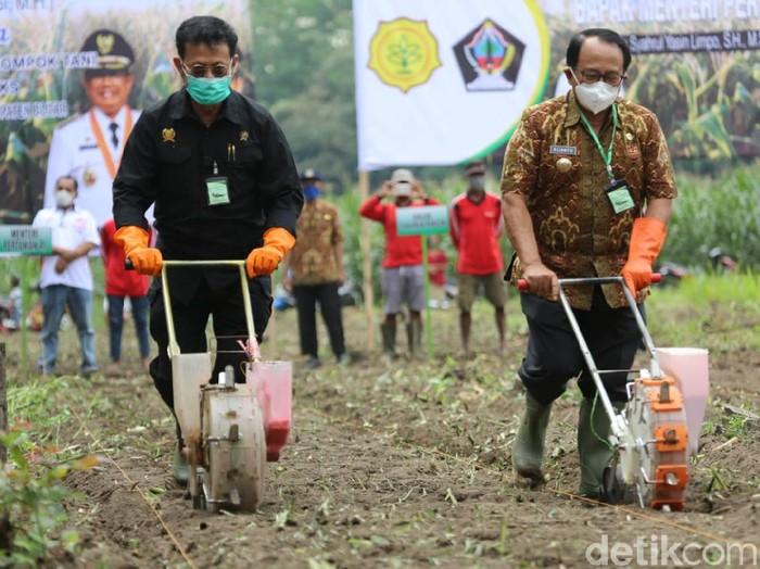 Menteri Pertanian (Mentan) Syahrul Yasin Limpo menanam jagung di Alas Maliran, Kecamatan Ponggok, Kabupaten Blitar. Mentan berpesan, jika ingin bebas sari penularan COVID-19, maka bertanilah.