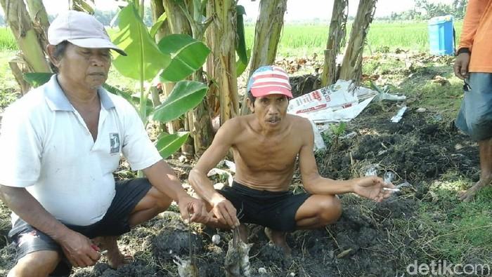 Petani di Cepu, Blora menunjukkan hama tikus hasil buruan