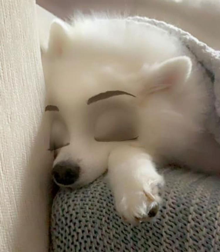 snapchat anjing disney
