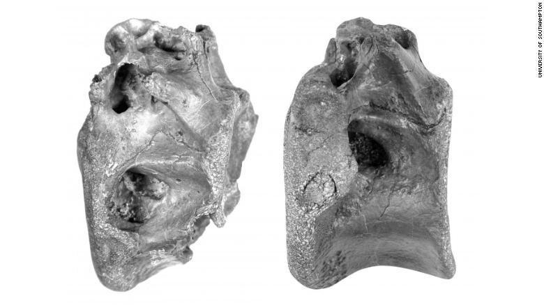 Tulang-tulang yangd itemukan milik hewan yang mirip Tyrex
