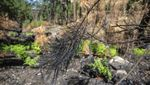Foto-foto Taman Nasional Coronado AS Pascakebakaran Hebat