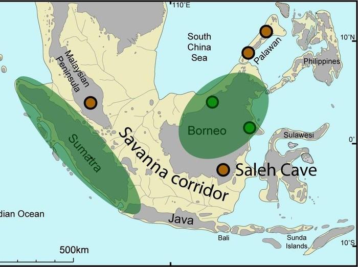 Savana di Sundaland di Zaman Es