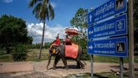 Kamp Gajah Maesa telah berjuang untuk mendapatkan daya tarik sejak dibuka kembali.