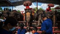 Jumlah turis yang menyusut membuat kamp tersebut terpaksa menawarkan tiket masuk gratis dengan harapan mendapatkan sedikit uang melalui pengunjung yang membeli makanan untuk memberi makan gajah.
