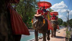 Gajah-gajah Chiang Mai yang Kangen Turis