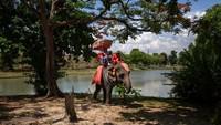 Ketika Thailand diisolasi pada bulan Maret dalam upaya untuk mengekang penyebaran virus Corona, suaka gajah dan kamp berkuda terpaksa ditutup dan merumahkan mahout sampai dibuka kembali.