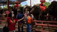 Tidak yakin kapan pariwisata asing akan pulih, para mahout dan pemilik suaka meminta sumbangan dan mencoba menyesuaikan diri dengan keadaan new normal.