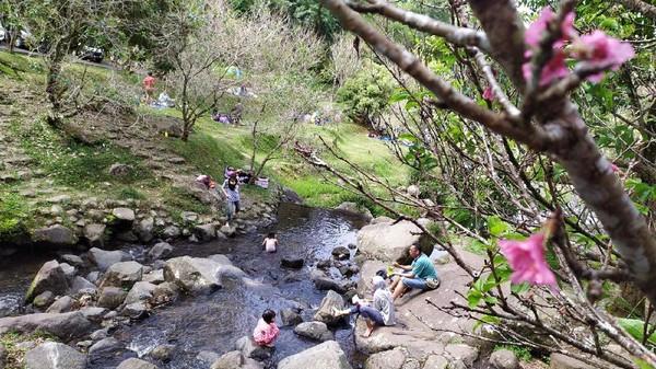 Memiliki luas 87 hektar, Kebun Raya Cibodas suguhkan berbagai spot wisata yang nyaman untuk sekadar bersantai sambil menikmati suasana serta pemandangan alam yang indah. Ada tiga spot utama yang kerap dipenuhi pengunjung di Cibodas, mulai dari danau besar dengan bukit yang mengelilinginya. Foto: Ismet Selamet/detikcom