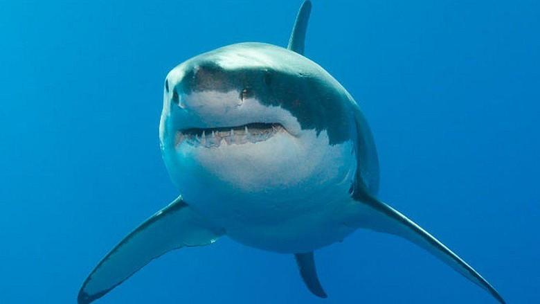 Australia: Peselancar selamatkan istri dengan meninju hiu berulang kali
