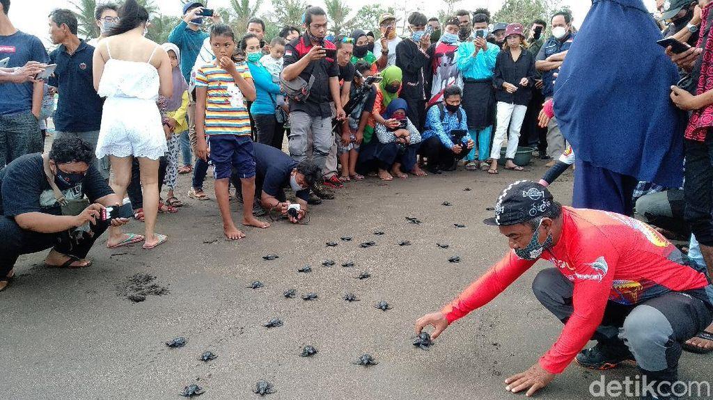 HUT RI ke-75, 100 Tukik Dilepasliarkan di Pangandaran