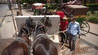 Society for Protection Animals Abroad (SPANA) melaporkan sekitar lebih dari 200 ekor kuda dan keledai yang biasa mengangkut wisatawan di kota Marrakech menderita kelaparan sebagai efek samping wabah COVID-19. SPANA pun turun tangan memberikan bantuan. (Mosaab El Sham/AP)