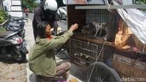 Kisah Tukang Rongsok Rawat Kucing Jalanan yang Sakit di Yogya