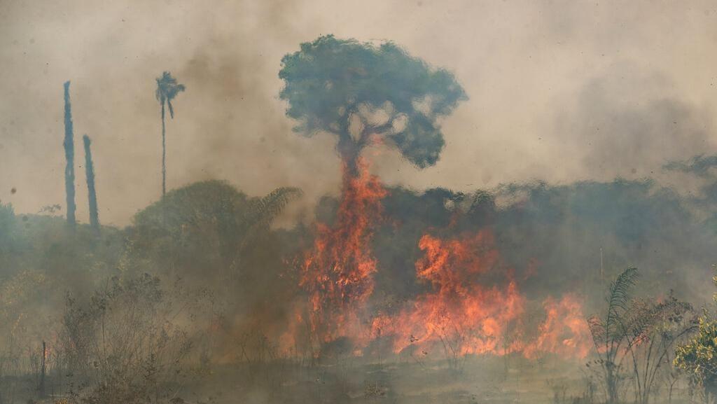Kebakaran Hutan di Argentina Cepat Meluas