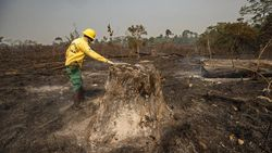 Upaya 20 Tahun Mengembalikan Hutan yang Hilang di Brasil