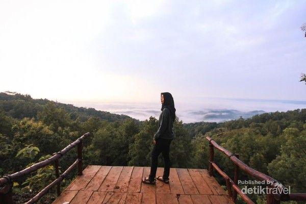 Hutan Pinus Asri