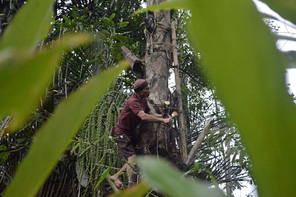 Petani menyadap pohon aren di Banjarwangi, Kabupaten Garut, Jawa Barat, Rabu (19/8/2020). Dalam sehari petani tersebut mampu mengumpulkan air nira aren sebanyak tiga sampai lima liter yang kemudian diolah menjadi gula merah dan dijual Rp15 ribu hingga Rp18 ribu per kilogram. ANTARA FOTO/Candra Yanuarsyah/agr/aww.