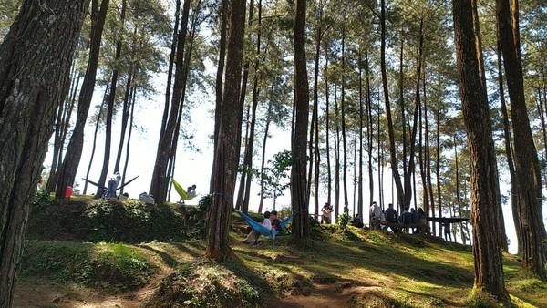 Wisata Alam Darmacaang hill biasa ramai oleh pengunjung di akhir pekan, baik yang kemping atau piknik keluarga. (Dadang Hermansyah/detikcom)