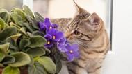Pria Dermawan Ini Wariskan Uang untuk 50 Kucing di Museum Rusia