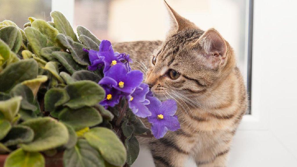 Guru Besar IPB Ungkap Kenapa Tak Ada Kucing Calico Jantan