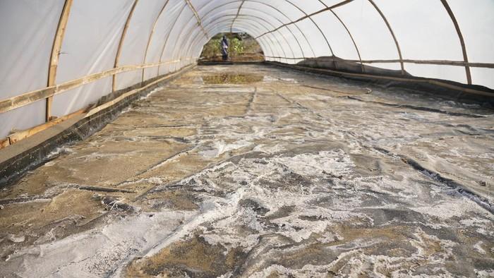 Warga melihat lahan pertanian garam di Gadingsari, Sanden, Bantul, DI Yogyakarta, Kamis (20/8/2020). Petani garam setempat melakukan inovasi dari sistem tradisional beralih dengan sistem