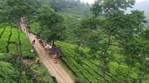Satpol PP Bogor Bubarkan Kerumunan 100 Pemotor di Kebun Teh Puncak