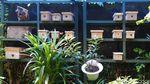 Keren, RW di Kota Bandung Ini Budidaya Lebah Trigona