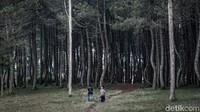 Wisatawan bisa melepas penat dengan melakukan forest healing.