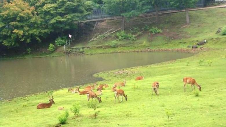 Taman Rusa di Nara