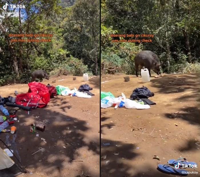 Kemah di Gunung Cikuray, Makanan Pendaki Ini Dicuri Babi Hutan