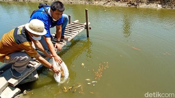 Pemuda Desa Wates, Kecamatan Undaan Kudus bekerja sama dengan Undip memanfaatkan irigasi menjadi kolam ikan, Sabtu (22/8/2020).