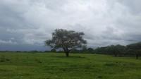 Taman Nasional Baluran memiliki luas 25.000 hektar. Traveler bisa menemui padang savana, hutan, pantai hingga bertemu ratusan hewan. (Gemabayu48/dTraveler)