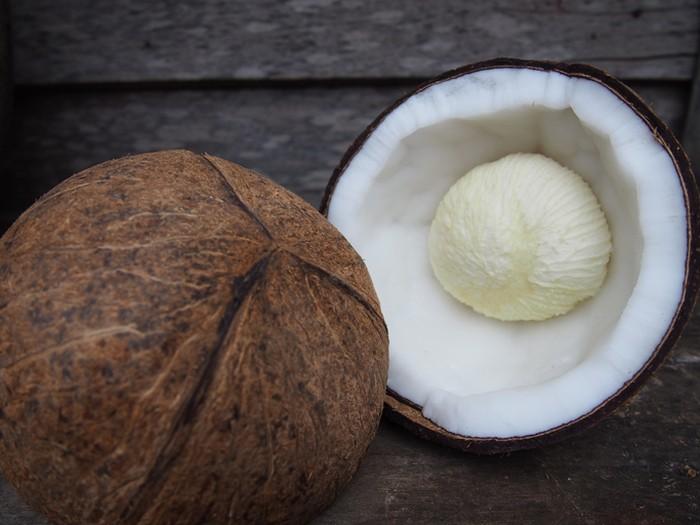 Kentos kelapa