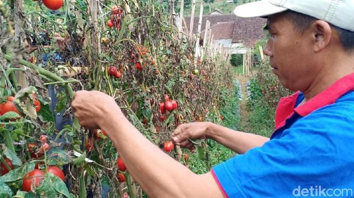 Petani di Lembang, Kabupaten Bandung Barat.