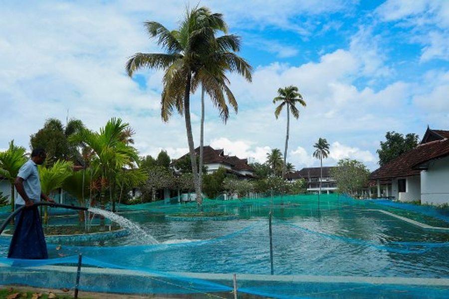 Dalam gambar yang diambil pada tanggal 23 Agustus 2020 ini, pemandangan umum dari kolam renang yang telah berubah menjadi peternakan ikan digambarkan di Aveda Resort di Kumarakom, di negara bagian Kerala. - Sebuah resor mewah di India selatan telah mengubah kolam renangnya menjadi peternakan ikan untuk menghentikan bisnisnya tenggelam di tengah pandemi krisis ekonomi. Biasanya kolam renang sepanjang 150 meter (500 kaki) di Aveda Resort di negara bagian Kerala dipadati oleh wisatawan Eropa. Sekarang ribuan ikan bintik mutiara menyebabkan percikan. (Foto oleh Arun CHANDRABOSE / AFP)